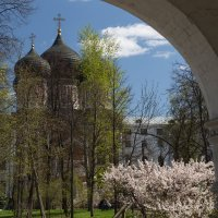 Взгляд из-за стены :: Светлана