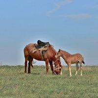 Серия Донские лошади (пока мама на работе) :: Petr Popov