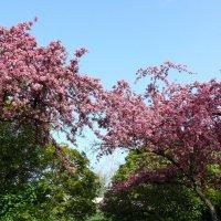Время цветения яблонь :: Елена Елена