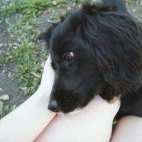 Ласковый пёс :: Света Кондрашова