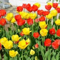 Цветы мая. :: Oleg4618 Шутченко