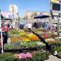 весенний рыночек... :: Галина Флора