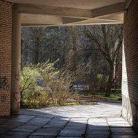 Весна :: Светлана Сарбей