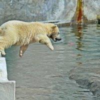 """""""И кто сказал, что медведи не летают..."""" :: Alexandr Zykov"""