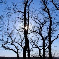 деревья ветвистые на закате :: Ангелина К