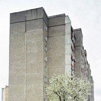 Цвет, зелень, бетон :: Сергей Тарабара