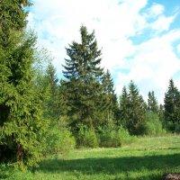 Весенний  лес :: Виктор Елисеев