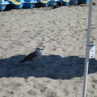 На пляже :: Сергей
