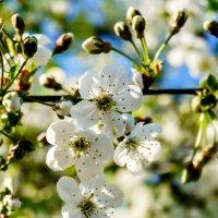 Весна :: Виктор Желенговский