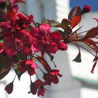 Когда цвели сады... :: lady-viola2014 -