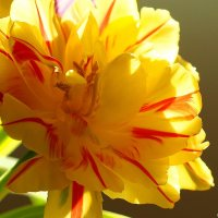 Цветы победителям! :: Swetlana V