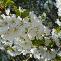 Весна однако. :: dgozia.sergey Нескажу