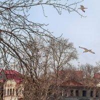 Птицы :: Lidiya Gaskarova