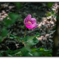 в лесу :: Sergey Bagach