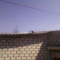На крыше! :: Миша Любчик