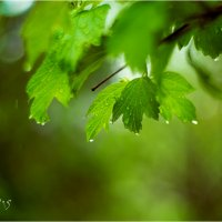 дождь2 :: yameug _