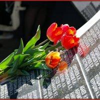 Вечная память :: Андрей Заломленков