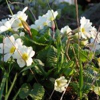 Весна :: Tanya TVT