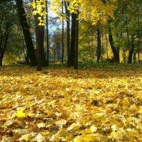 Осень :: Юрий Тихонов