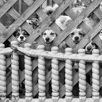 Приют для бездомных домашних животных :: Анатолий Тимофеев
