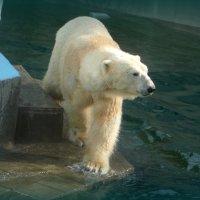 Новосибирский зоопарк... :: Ольга Кондратова