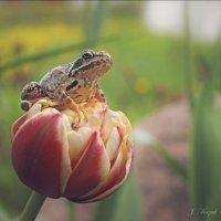 Лягушка и цветок. :: Елена Kазак