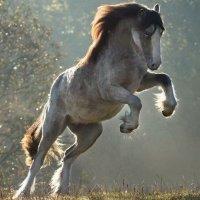 Лошадь :: Алёна Дион