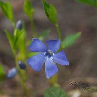 Цветок :: Алексей Шеметьев