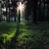 Луч солнца озарил поляну... :: Anna Sedova