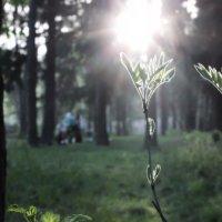 Лес, лес и еще раз лес :: Anna Sedova