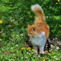 Весна  и  кошке  приятна. :: Валера39 Василевский.