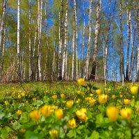 Прогулка по весеннему лесу :: Роман Царев