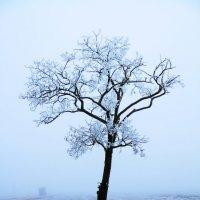 Как то зимой :: Александр Шевченко