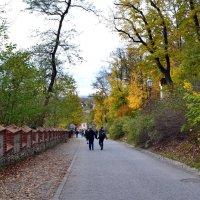 Осенними дорогами :: Ольга