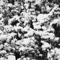 Spring je :: Екатерина Захарова