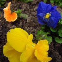 Городские цветы :: Андрей Лукьянов