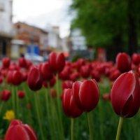 тюльпановый проспект :: Edward Kod