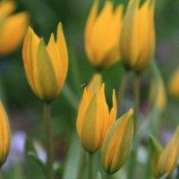 Ботаничексий сад 07.05. :: Полина