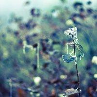 холод :: Anna Kononets