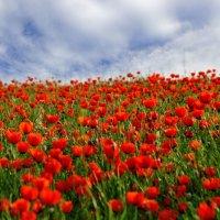 весна (пригород Алматы) :: Gmm12345