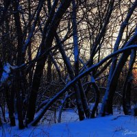 Холодное солнце :: Галина Стрельченя