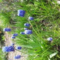 Цветы :: Мария Владимирова