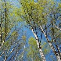 Синее, зеленое, белое :: Andrad59 -----