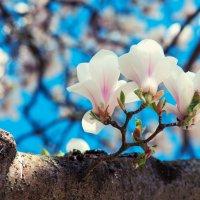 Весна тревожит душу мне. :: Фомин Виталий