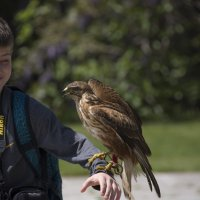 мальчик и птица :: Svetlana AS