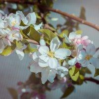 весна :: Оксана Лашманова