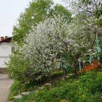 Май на моей улице :: Борис Назаров