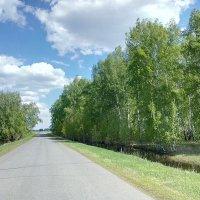 По дороге домой :: Алексей Масалов