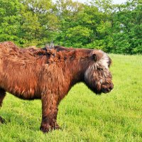 То ли буйвол, то ли бык, то ли тур. :: nikolas lang