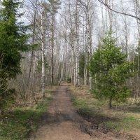В Весеннем лесу. :: Валентина Жукова